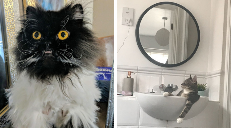 tlustá a pevná kočička